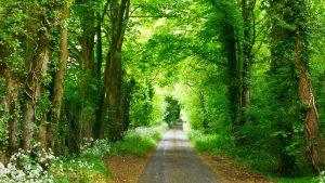 vei gjennom skog, vakkert mindfulness